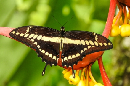 Butterfly at Las Nubes