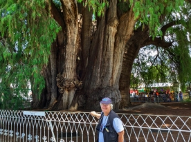 Chris in front of a 2,000-year-old tree in Santa Maria del Tule