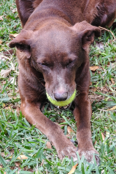 Morena is the dog at Overlander Oasis. Just try and take her ball.