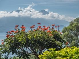 Flowering bush on the grounds of Passaj Cap