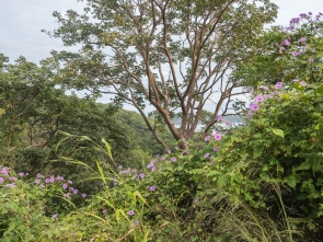 Guanacaste biring habitat