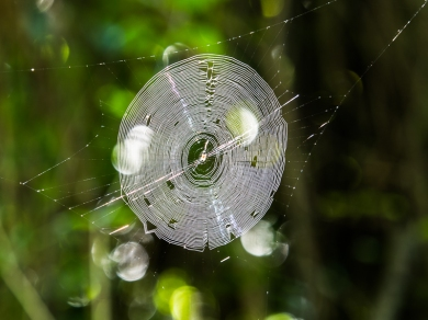 Spider Web in Tropical Forest