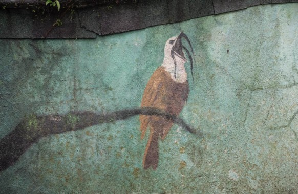 A mural depicting the Three-wattled Bellbird. Unfortunately for us, it's the wrong time of the year to see the bird.