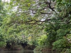 Corobici River