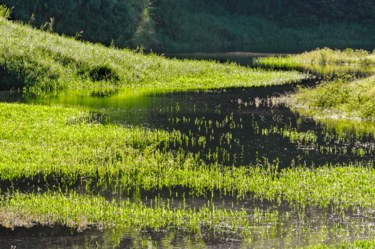 Wetland, Lago Arenal
