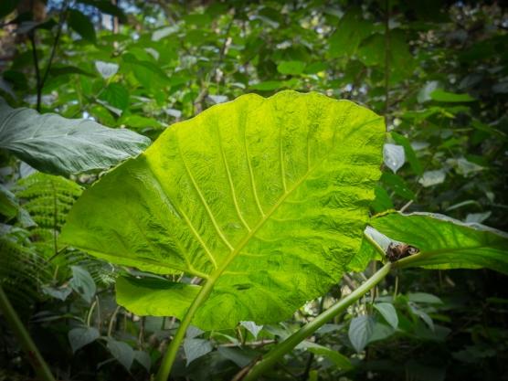 The Glass Leaf