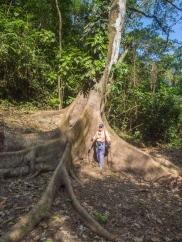 Villa Tavida - Chris standing next to El Espavé - a wild cashew tree.